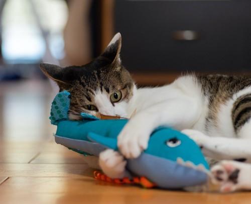 ぬいぐるみを抱えて遊ぶ猫