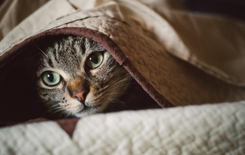 怯えて隠れている猫