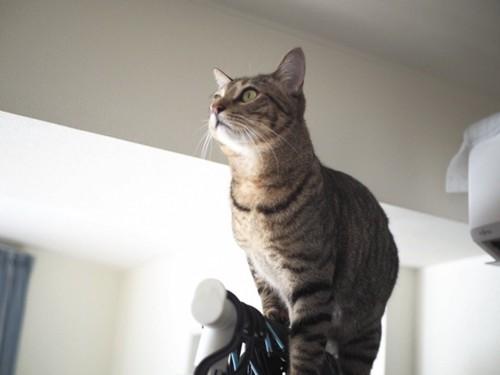 ハンガーラックの上の猫