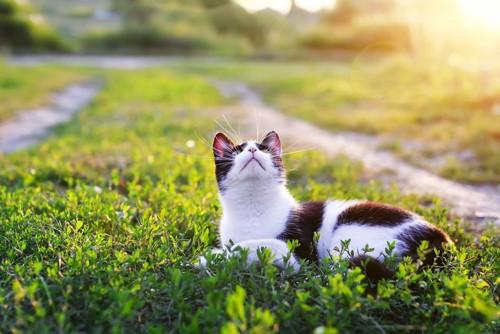 上を見上げる猫
