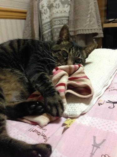 枕を使う猫