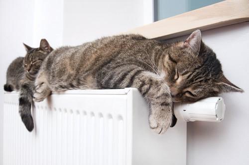 ストーブの上で寝ている2匹の猫