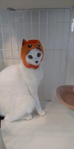 被り物で遊ぶバン猫