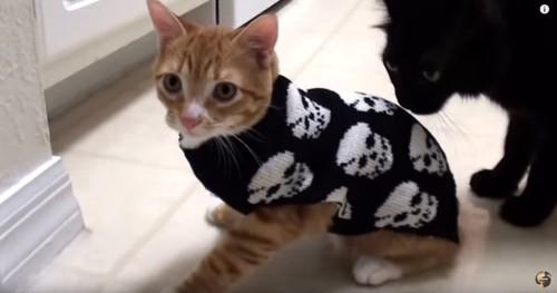 ドクロ柄のセーターを着た猫