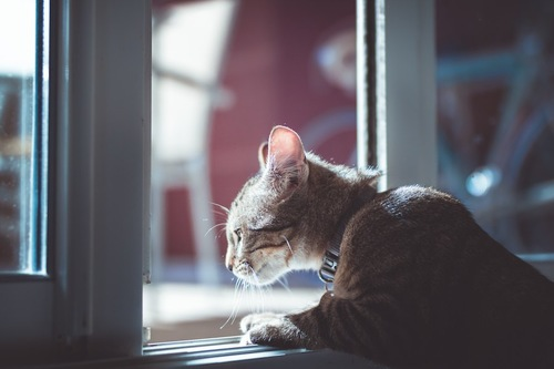 ペットフェンスのない開いている窓から外を眺める子猫