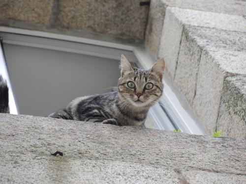 窓から脱走する猫