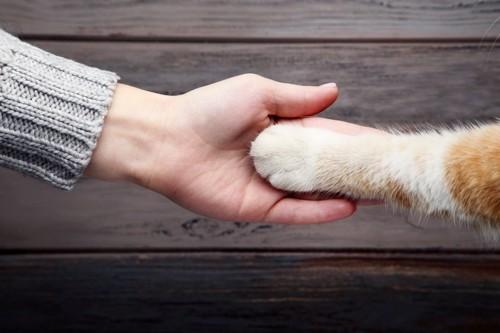 人の手と猫の前足