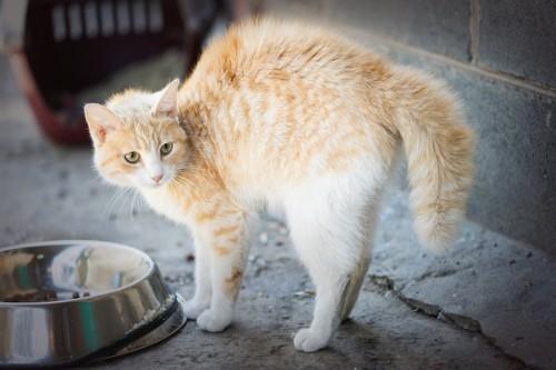 背中を丸めて警戒する猫