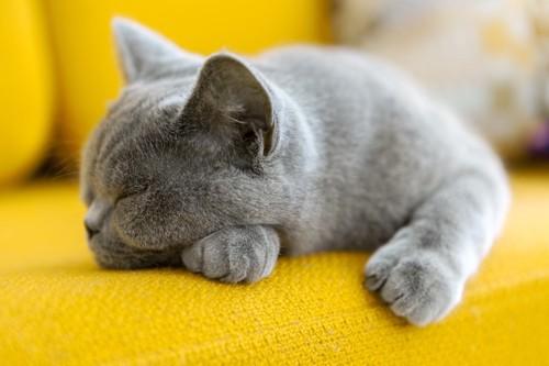 黄色いソファで寝る猫