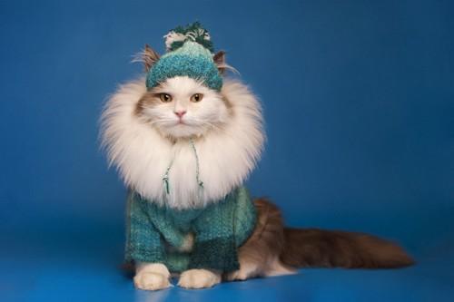 暖かそうな服を着た猫