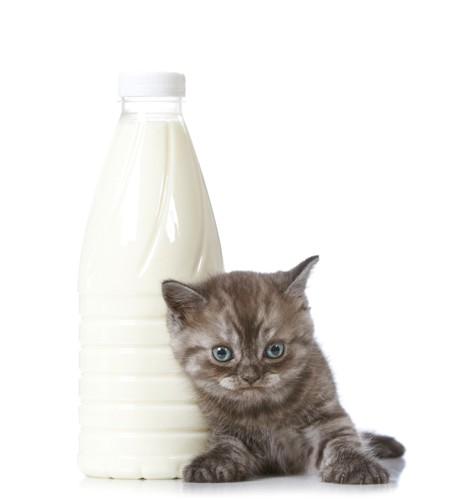 猫とミルク