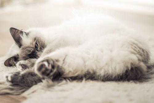 セピア色の猫