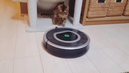 ロボット掃除機を見る猫