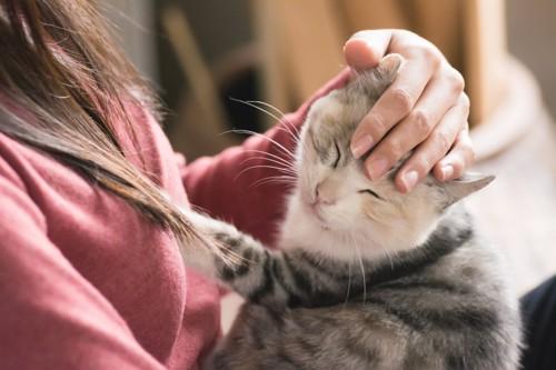 撫でられ目を瞑る猫
