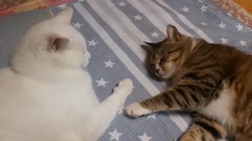手が離れる猫