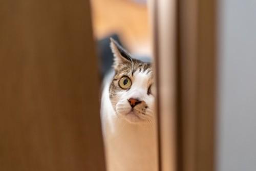 ドアの隙間からこちらを見る猫