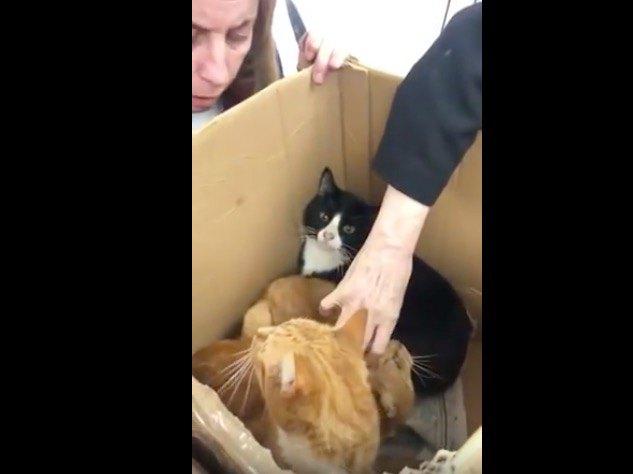 やっぱり猫