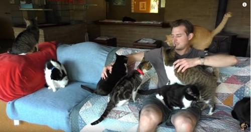 ソファに座る男性と複数の猫