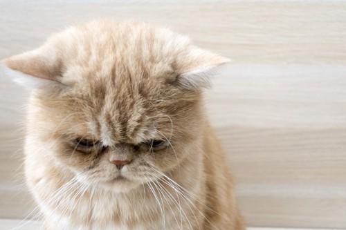 俯いて悲しげな猫の顔アップ