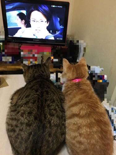 一緒にテレビを見る猫