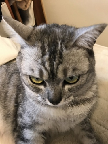 警戒心でいっぱいの猫