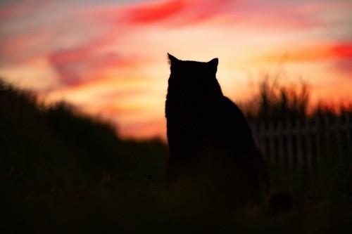 夕焼けと猫のシルエット