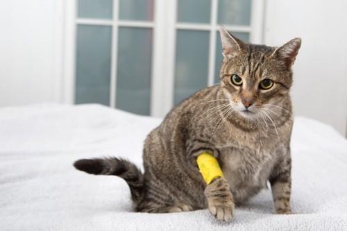 黄色の包帯をする猫