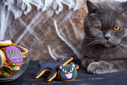 猫と猫クッキー