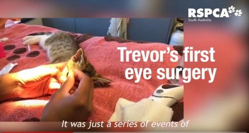 手術台の上の猫