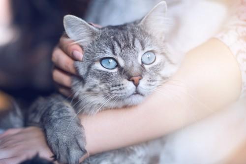 腕に抱かれる猫