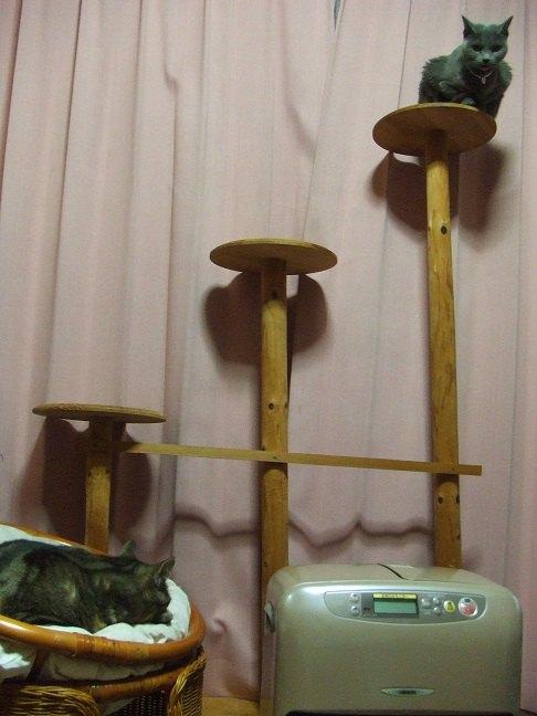 カーテンの前のキャットタワーにネコが乗っている画像
