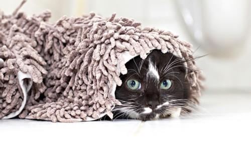 マットにくるまる猫
