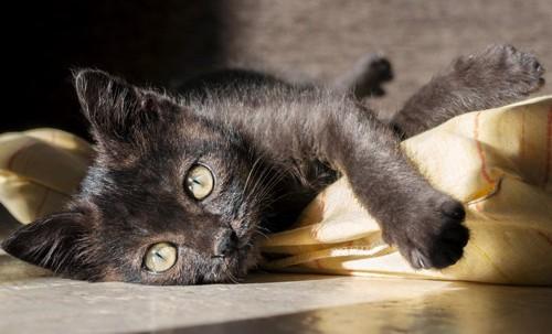 日なたに居る黒猫