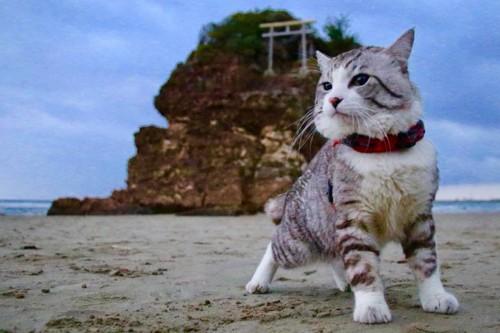 浜辺でのニャン吉