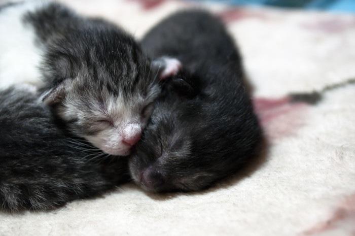 小さな子猫たち