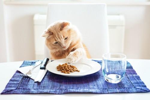 お皿のごはんに前足を伸ばす猫
