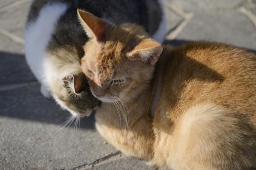 頭をすりすりする猫たち