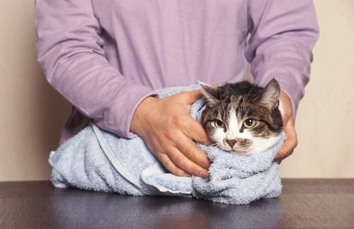タオルで体を包まれている猫