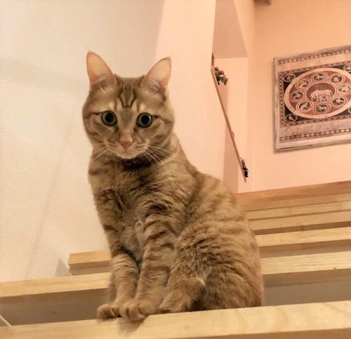 階段に佇む猫(すずこ)