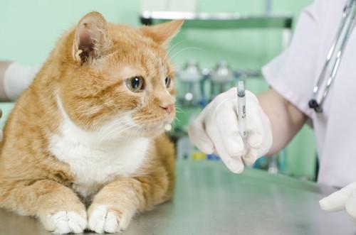 注射器を持つ獣医師と猫