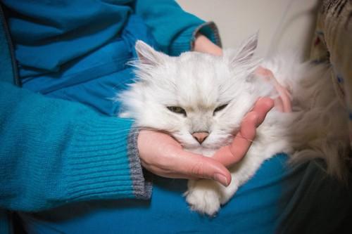 飼い主の膝の上で甘える猫