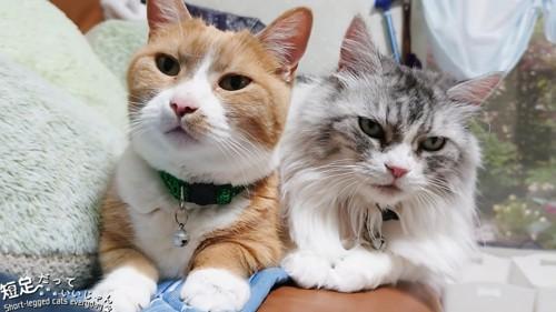 並ぶ2匹の猫