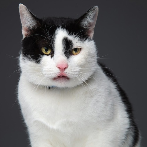 フレーメン反応をしている猫