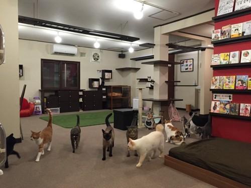 ミューキーズの店内と猫たち