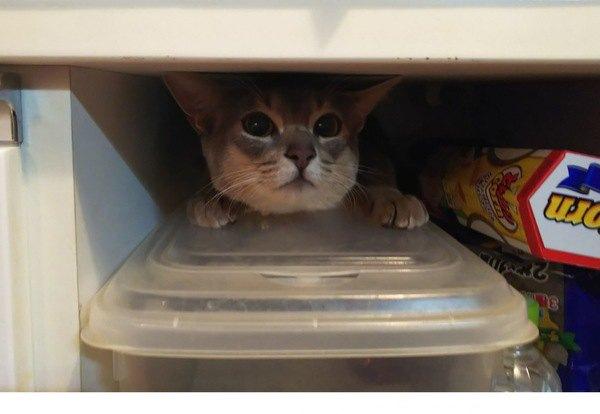 棚の中に隠れる猫