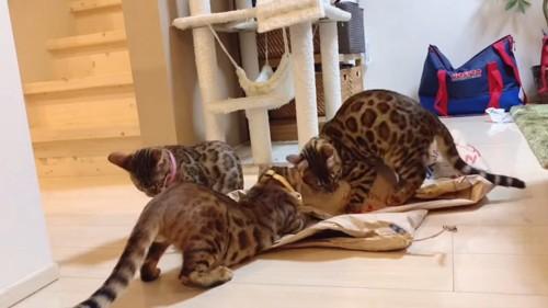 米袋に集まる3匹の子猫