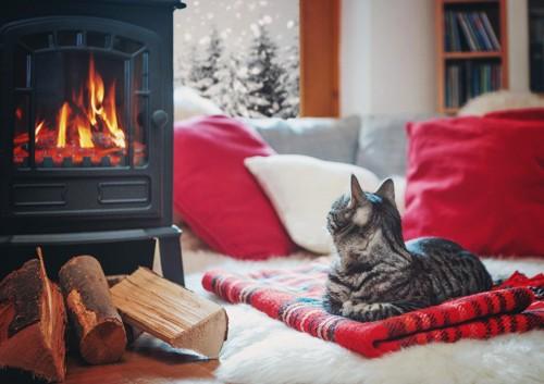暖炉の前にいる猫