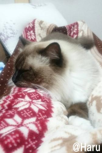 #足の上で寝ている姿#