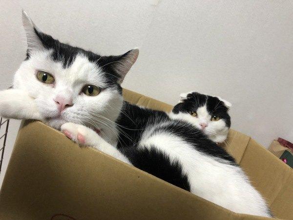 白黒の双子猫