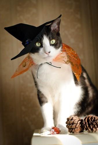 ハロウィン魔女ネコ